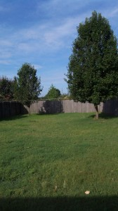 Our backyard... please note that Dave has already hung up clothesline for me!